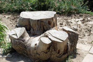 Local tree stump removal and grinding services