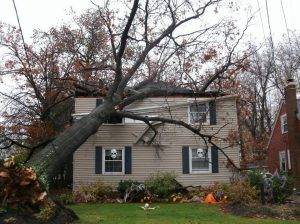 storm damage tree removal